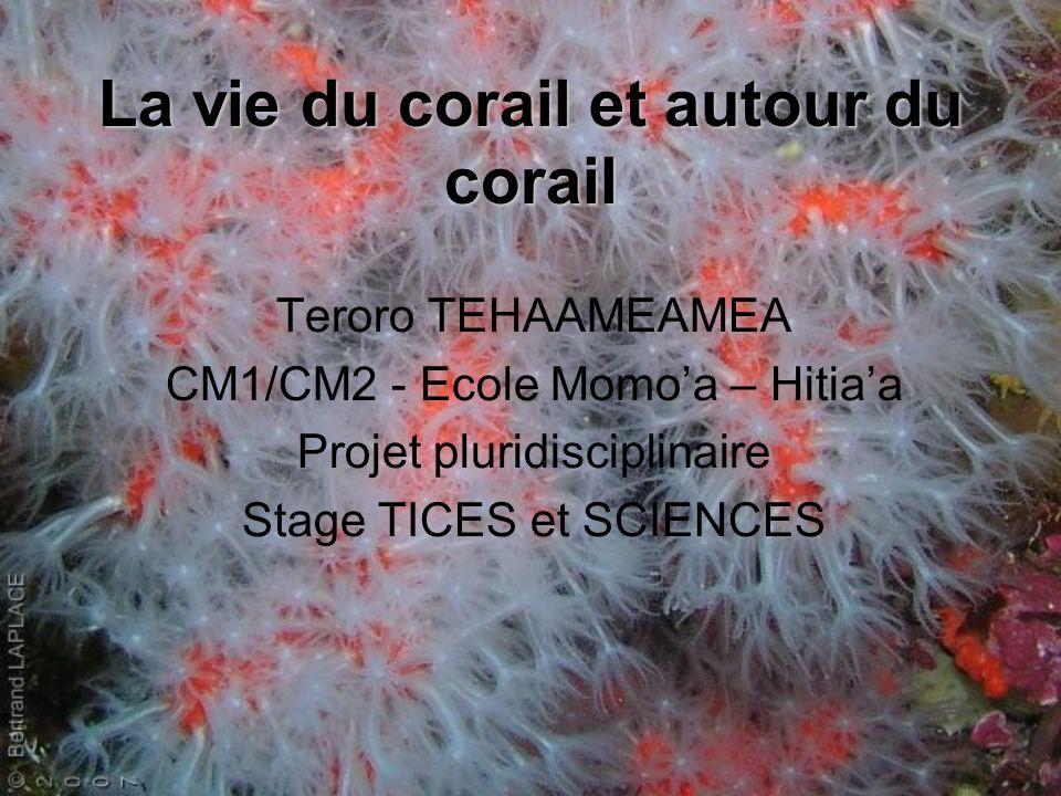 La vie du corail et autour du corail Teroro TEHAAMEAMEA CM1/CM2 - Ecole Momoa – Hitiaa Projet pluridisciplinaire Stage TICES et SCIENCES