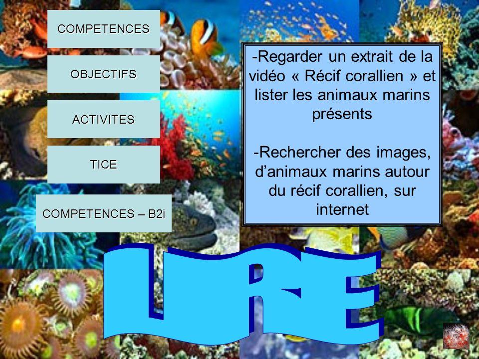 -Lister les animaux marins rencontrés dans le livre documentaire -Extraire des informations sur ces animaux COMPETENCES OBJECTIFS ACTIVITES COMPETENCES – B2i COMPETENCES – B2i TICE