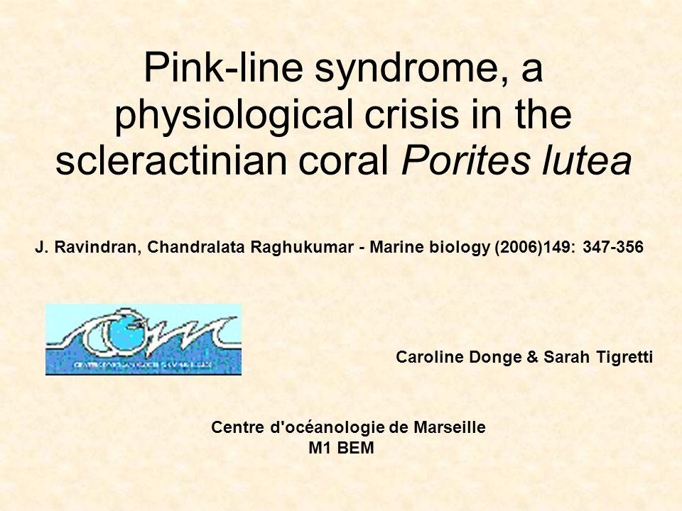 Introduction Maladies du corail: modifications de leur couverture et de leur diversité Syndrome de la ligne rose (PLS): une bande colorée apparaît entre le tissu mort et sain d une colonie Plusieurs mycètes et une espèce de cyanobactéries, Phormidium valderianum, ont été isolés de colonies PLS-affectées.