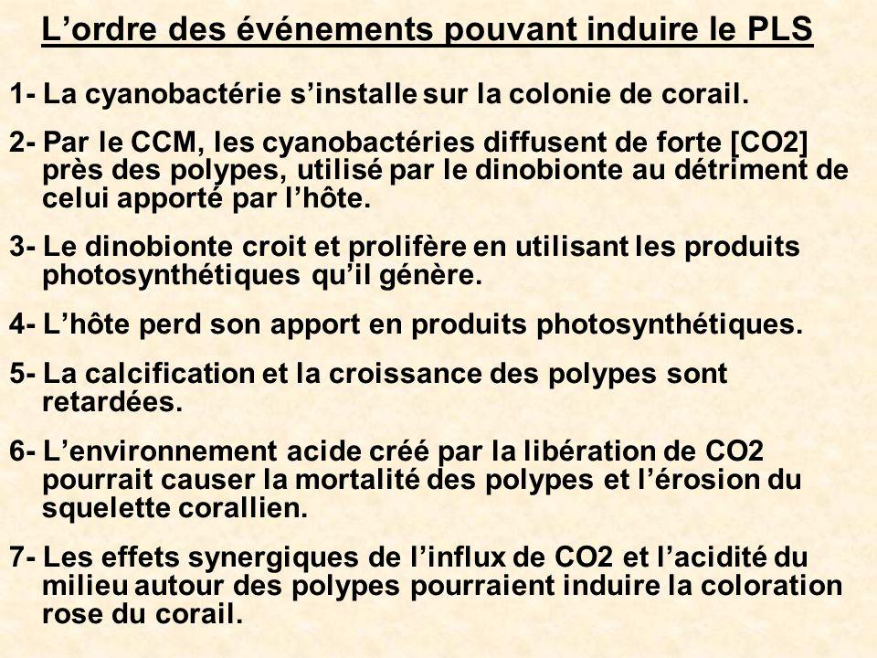 Lordre des événements pouvant induire le PLS 1- La cyanobactérie sinstalle sur la colonie de corail. 2- Par le CCM, les cyanobactéries diffusent de fo