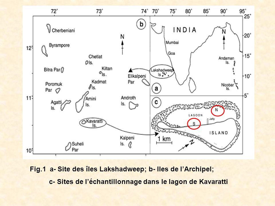Fig.1 a- Site des îles Lakshadweep; b- Iles de lArchipel; c- Sites de léchantillonnage dans le lagon de Kavaratti