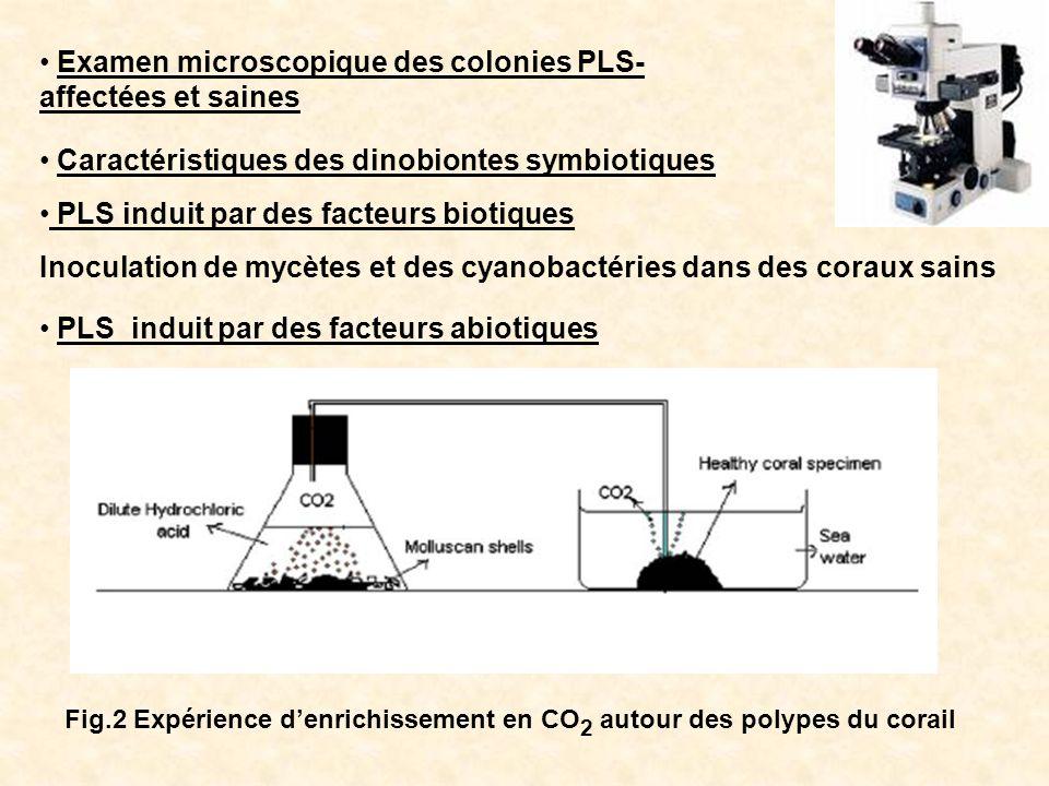 Examen microscopique des colonies PLS- affectées et saines Caractéristiques des dinobiontes symbiotiques PLS induit par des facteurs biotiques Inocula