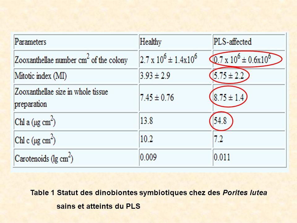 Table 1 Statut des dinobiontes symbiotiques chez des Porites lutea sains et atteints du PLS