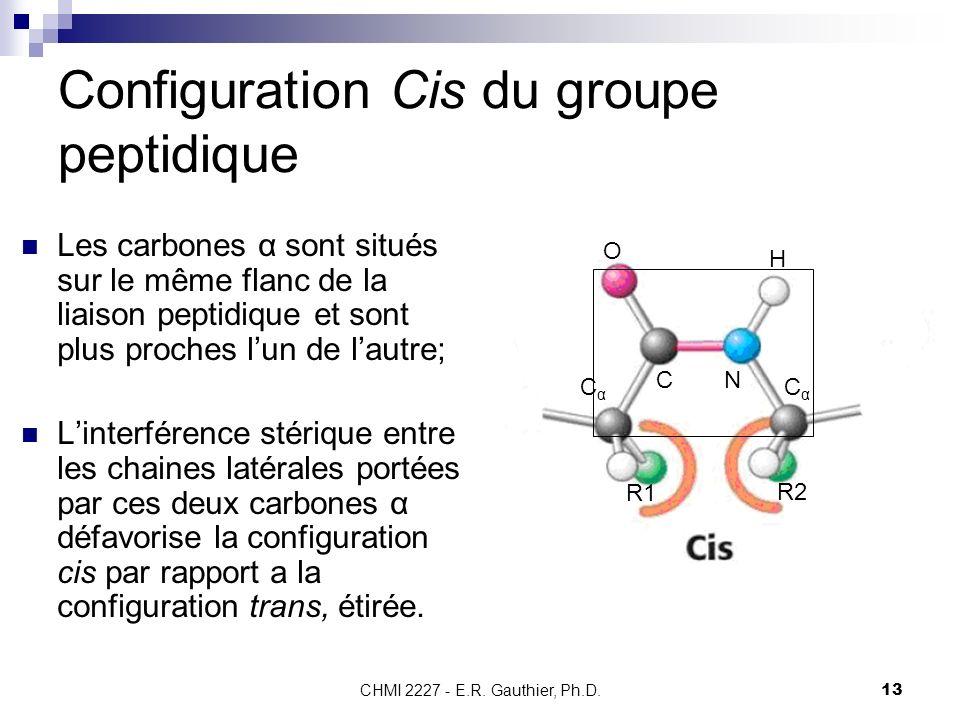 CHMI 2227 - E.R. Gauthier, Ph.D.13 Configuration Cis du groupe peptidique Les carbones α sont situés sur le même flanc de la liaison peptidique et son