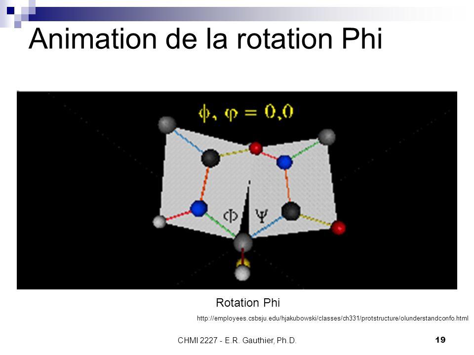 CHMI 2227 - E.R. Gauthier, Ph.D.19 Animation de la rotation Phi Rotation Phi http://employees.csbsju.edu/hjakubowski/classes/ch331/protstructure/olund