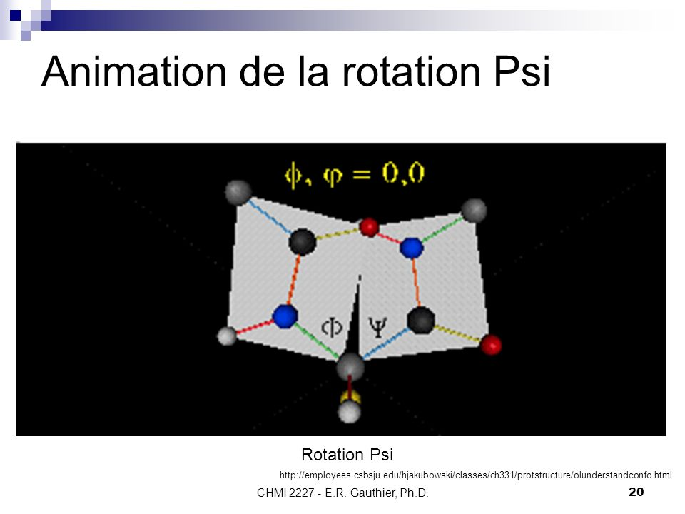 CHMI 2227 - E.R. Gauthier, Ph.D.20 Animation de la rotation Psi Rotation Psi http://employees.csbsju.edu/hjakubowski/classes/ch331/protstructure/olund