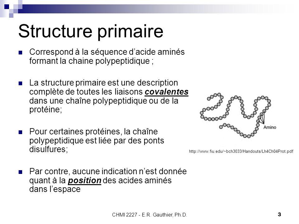 CHMI 2227 - E.R. Gauthier, Ph.D.3 Structure primaire Correspond à la séquence dacide aminés formant la chaine polypeptidique ; La structure primaire e