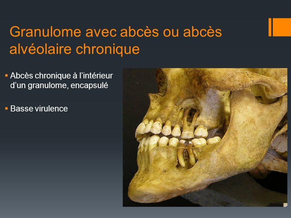 Granulome avec abcès ou abcès alvéolaire chronique Abcès chronique à lintérieur dun granulome, encapsulé Basse virulence