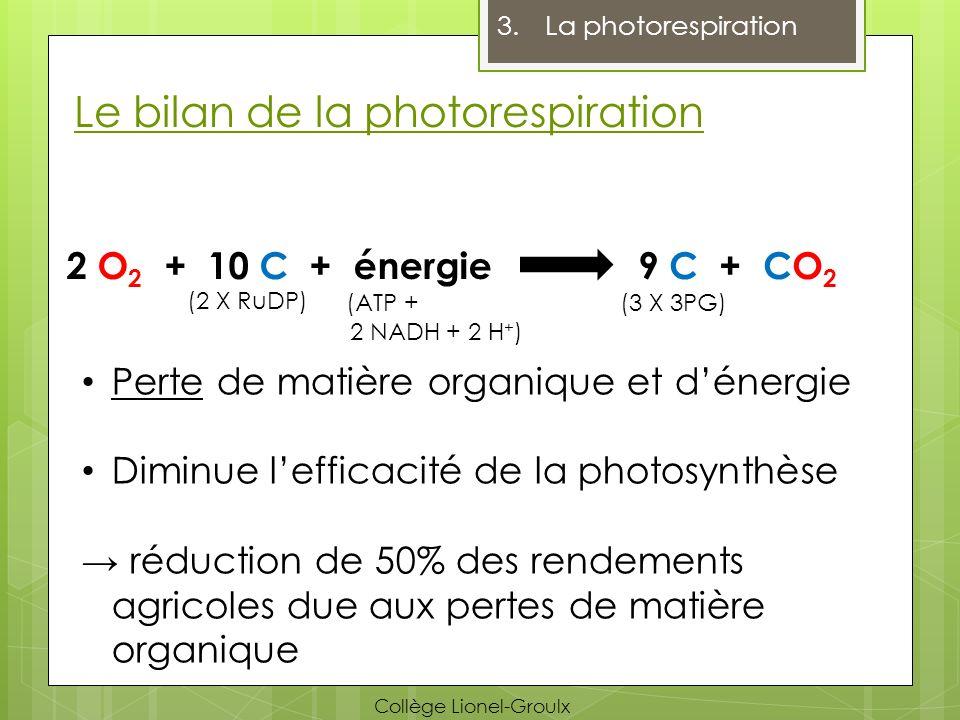 Le bilan de la photorespiration 3.La photorespiration 2 O 2 + 10 C + énergie9 C + CO 2 (2 X RuDP) (3 X 3PG) Perte de matière organique et dénergie Dim