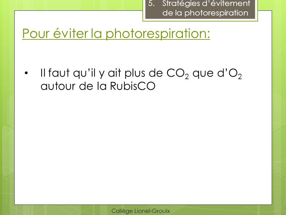 Pour éviter la photorespiration: 5.Stratégies dévitement de la photorespiration Il faut quil y ait plus de CO 2 que dO 2 autour de la RubisCO Collège