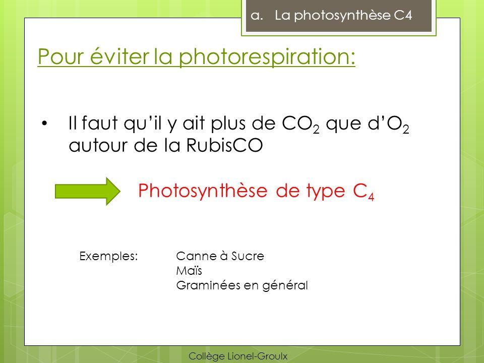 Pour éviter la photorespiration: Il faut quil y ait plus de CO 2 que dO 2 autour de la RubisCO Photosynthèse de type C 4 Exemples: Canne à Sucre Maïs