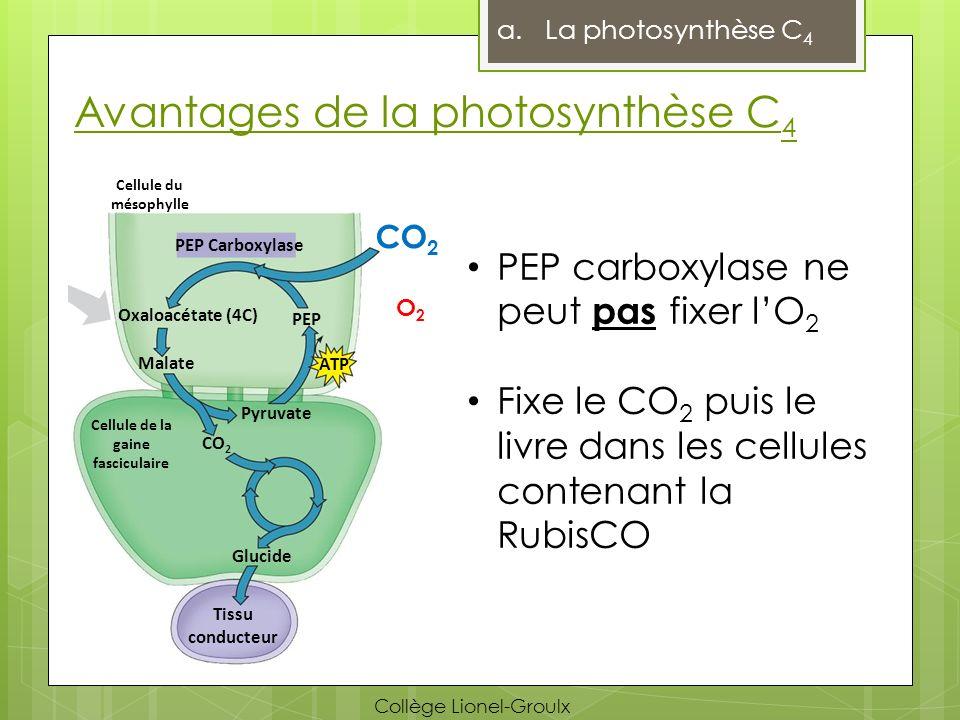 Avantages de la photosynthèse C 4 a.La photosynthèse C 4 PEP carboxylase ne peut pas fixer lO 2 Fixe le CO 2 puis le livre dans les cellules contenant