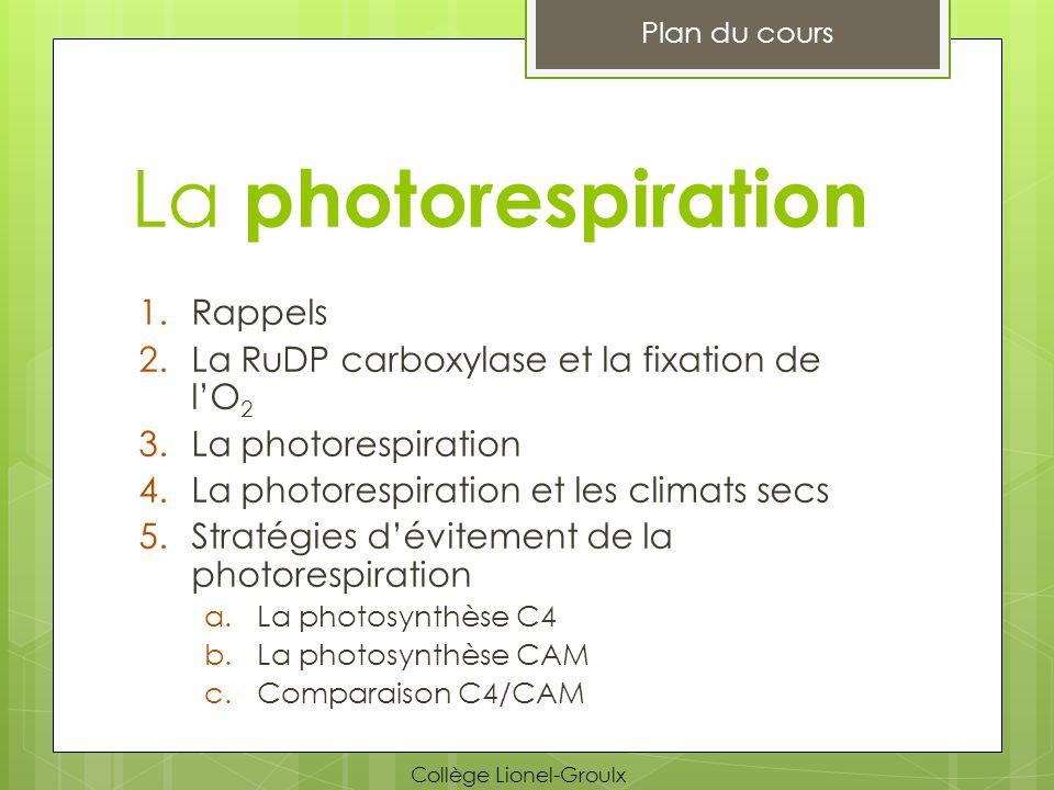 La photorespiration 1.Rappels 2.La RuDP carboxylase et la fixation de lO 2 3.La photorespiration 4.La photorespiration et les climats secs 5.Stratégie