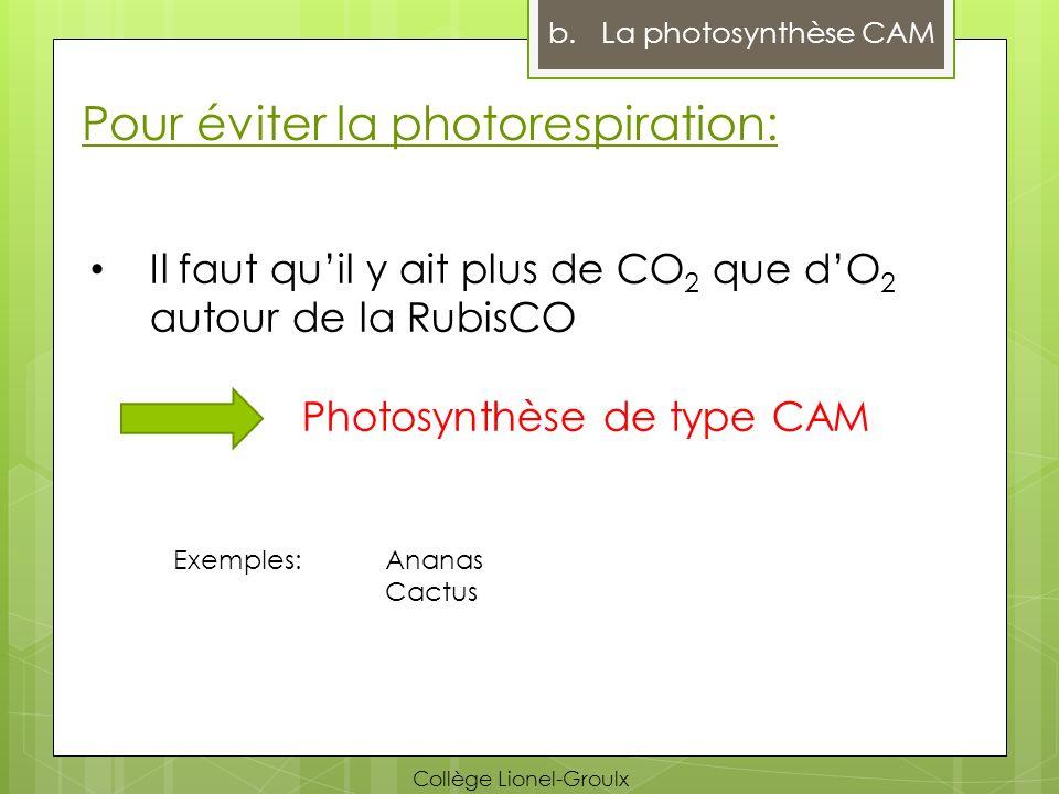 Pour éviter la photorespiration: Il faut quil y ait plus de CO 2 que dO 2 autour de la RubisCO Photosynthèse de type CAM Exemples: Ananas Cactus b.La