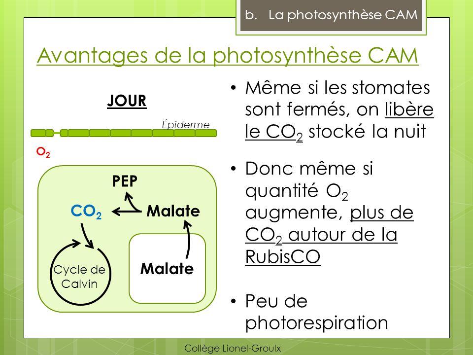 Avantages de la photosynthèse CAM b.La photosynthèse CAM Même si les stomates sont fermés, on libère le CO 2 stocké la nuit Donc même si quantité O 2