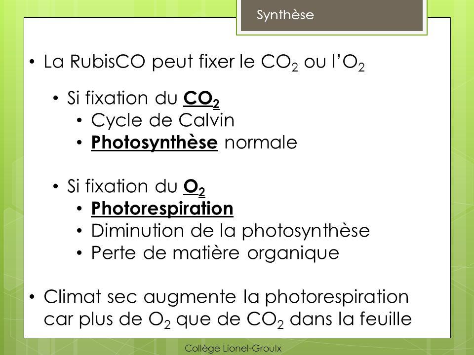 Synthèse La RubisCO peut fixer le CO 2 ou lO 2 Si fixation du CO 2 Cycle de Calvin Photosynthèse normale Si fixation du O 2 Photorespiration Diminutio