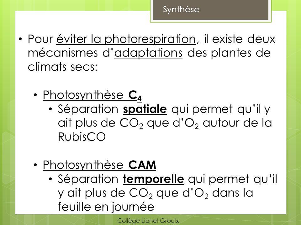 Synthèse Pour éviter la photorespiration, il existe deux mécanismes dadaptations des plantes de climats secs: Photosynthèse C 4 Séparation spatiale qu