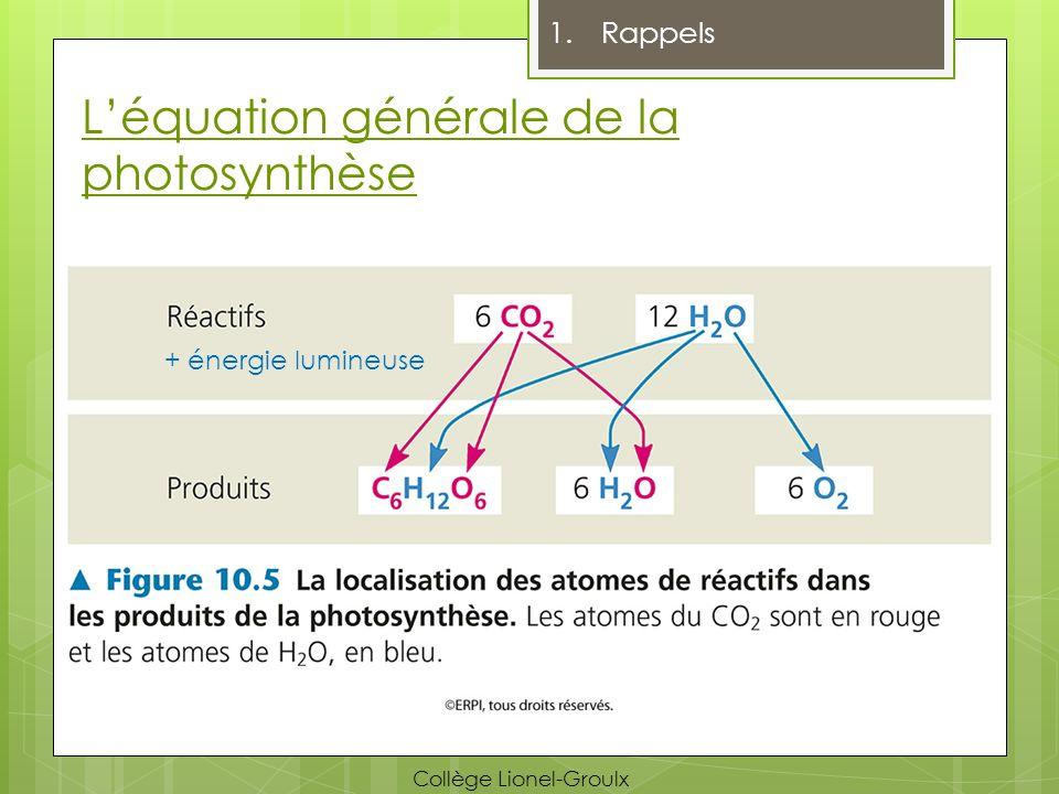 Impact du climat (Réponses) 4.La photorespiration et les climats secs Climat Normal Climat Sec CO 2 O2O2 Ouverts Fermés Éviter la perte deau O2O2 CO 2 O2O2 Plus de CO 2 que dO 2 Peu de photorespiration de O 2 de photorespiration Collège Lionel-Groulx