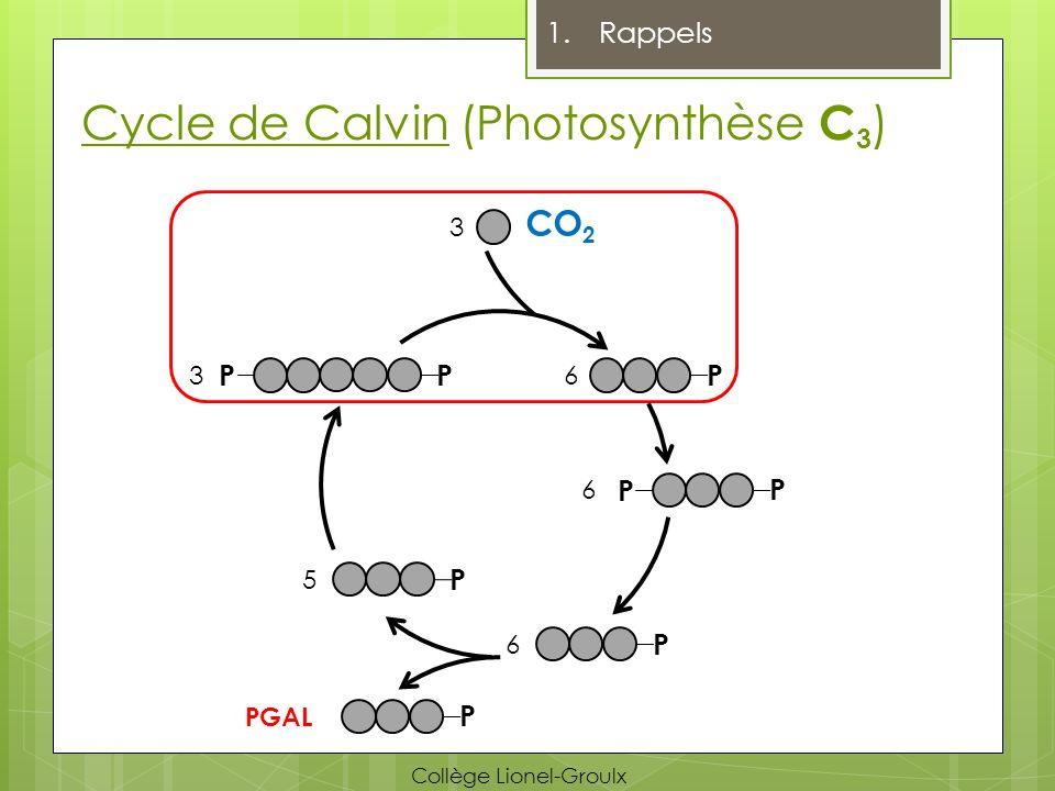 Comparaison c.Comparaison C 4 /CAM Séparation temporelle (Jour vs Nuit) C4C4 CAM Climats secs et arides Peu de photorespiration Séparation spatiale (Mésophylle vs Gaine) Collège Lionel-Groulx