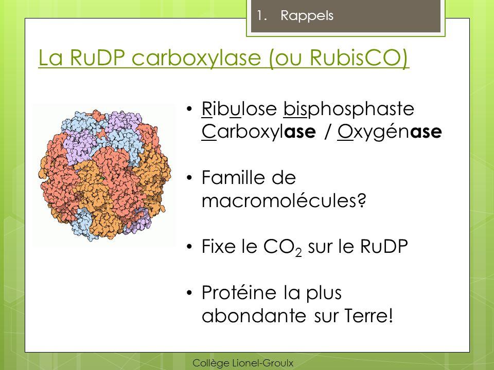La RuDP carboxylase (ou RubisCO) Ribulose bisphosphaste Carboxyl ase / Oxygén ase Famille de macromolécules? Fixe le CO 2 sur le RuDP Protéine la plus
