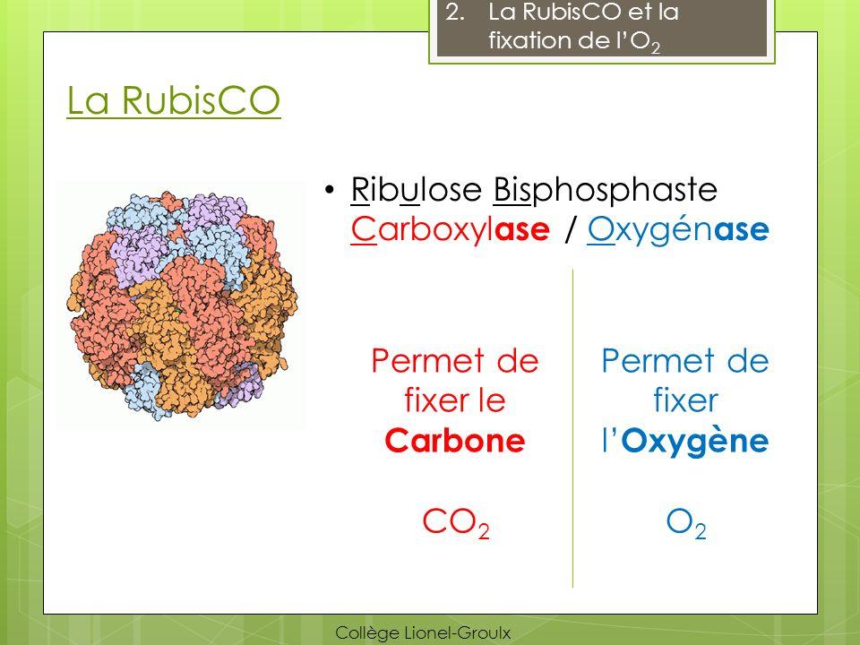 La RubisCO 2.La RubisCO et la fixation de lO 2 Capable de fixer le dioxygène (O 2 ) Si la concentration en O 2 est trop forte, alors cest lactivité oxygénase qui sera favorisée aux dépens de lactivité carboxylase Collège Lionel-Groulx