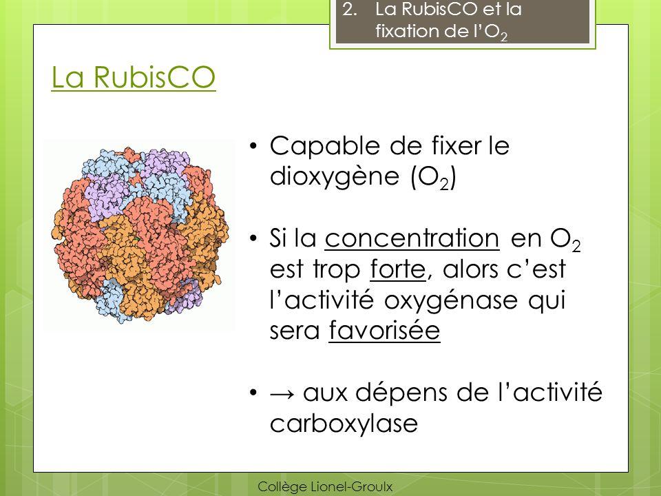 Avantages de la photosynthèse C 4 a.La photosynthèse C 4 PEP carboxylase ne peut pas fixer lO 2 Fixe le CO 2 puis le livre dans les cellules contenant la RubisCO PEP Carboxylase CO 2 O2O2 Oxaloacétate (4C) Malate CO 2 PEP ATP Pyruvate Glucide Cellule de la gaine fasciculaire Tissu conducteur Cellule du mésophylle Collège Lionel-Groulx