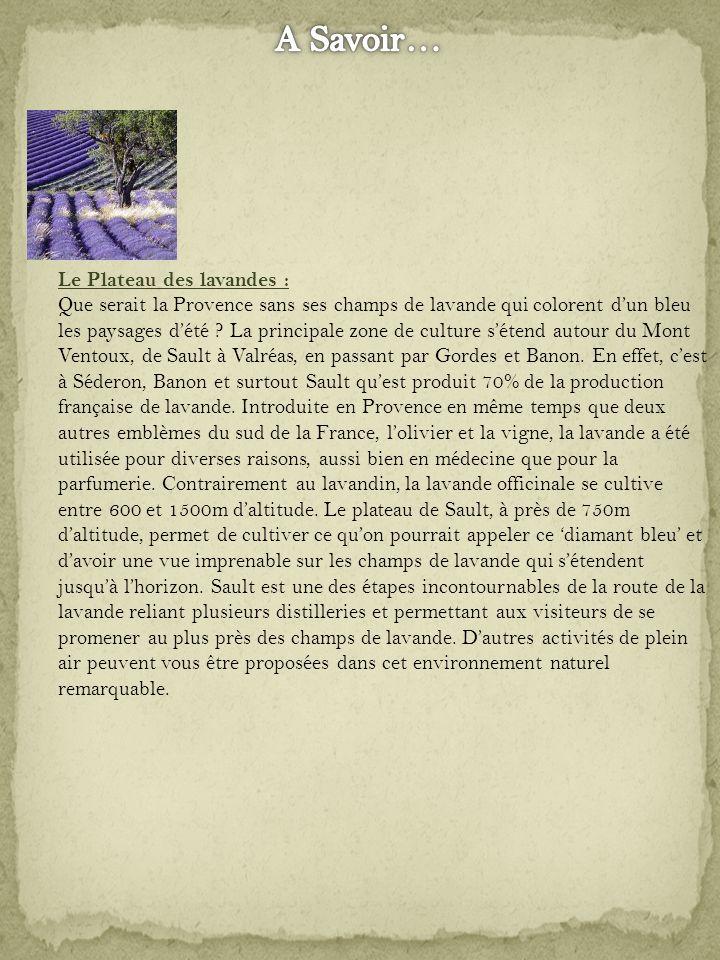 Le Plateau des lavandes : Que serait la Provence sans ses champs de lavande qui colorent dun bleu les paysages dété .