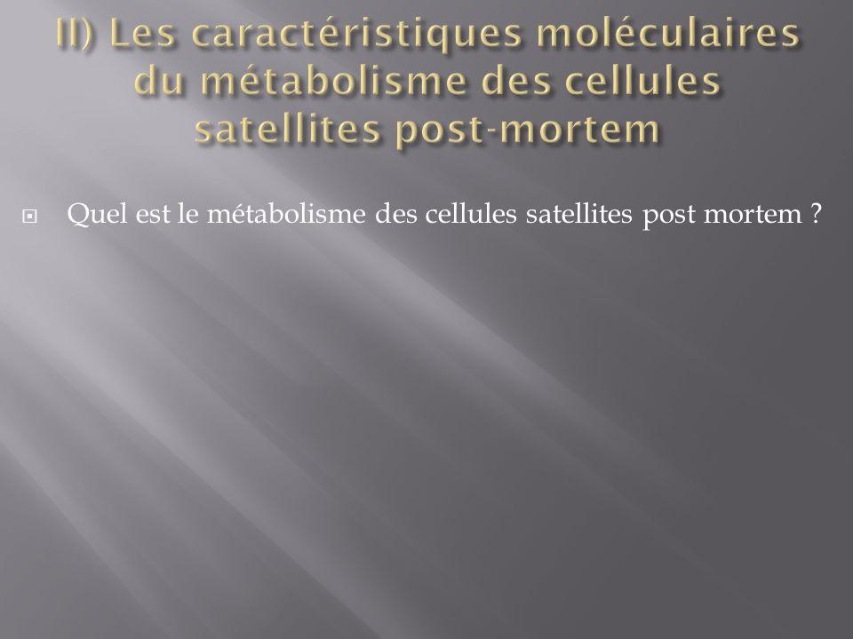 Quel est le métabolisme des cellules satellites post mortem ?