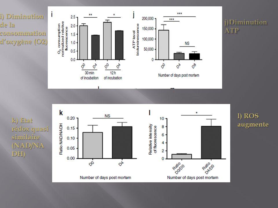 l) ROS augmente k) Etat rédox quasi similaire (NAD/NA DH) i) Diminution de la consommation doxygène (O2)