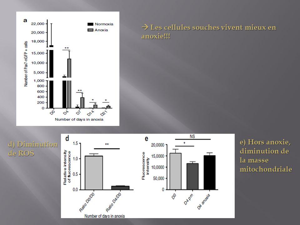 Les cellules souches vivent mieux en anoxie!!! Les cellules souches vivent mieux en anoxie!!! d) Diminution de ROS e) Hors anoxie, diminution de la ma