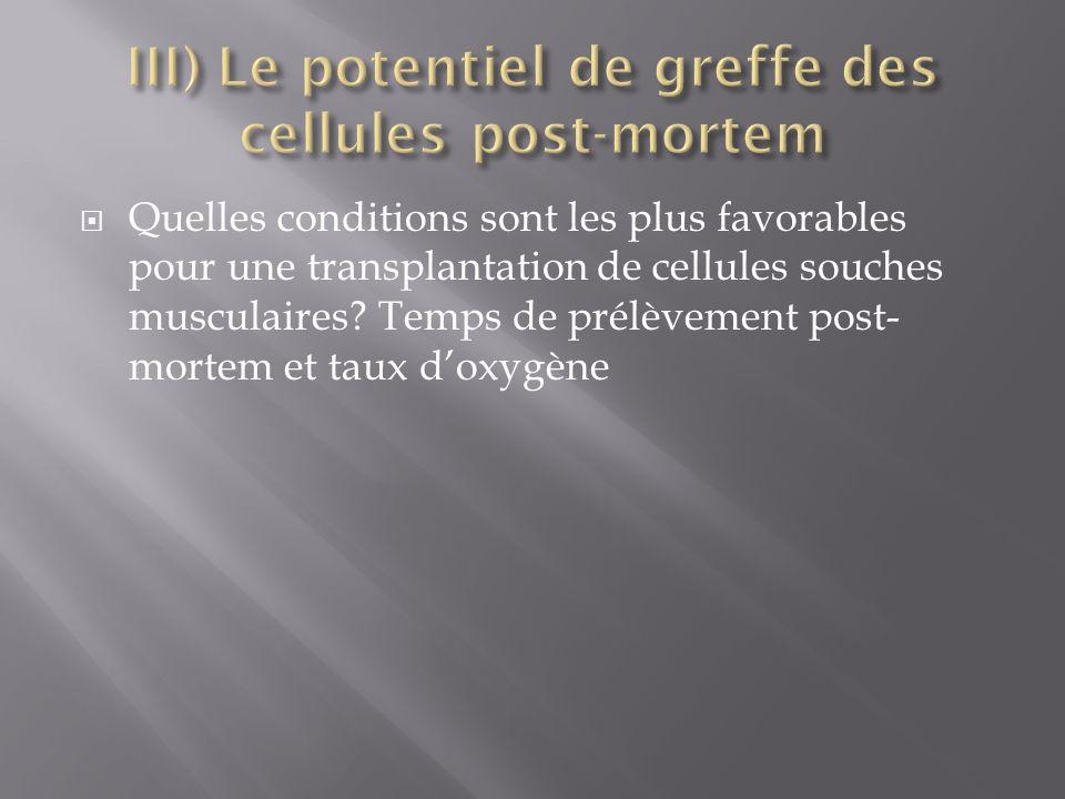 Quelles conditions sont les plus favorables pour une transplantation de cellules souches musculaires? Temps de prélèvement post- mortem et taux doxygè