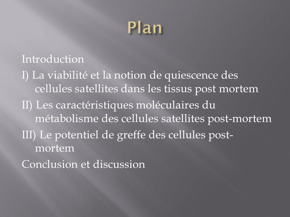 Introduction I) La viabilité et la notion de quiescence des cellules satellites dans les tissus post mortem II) Les caractéristiques moléculaires du m