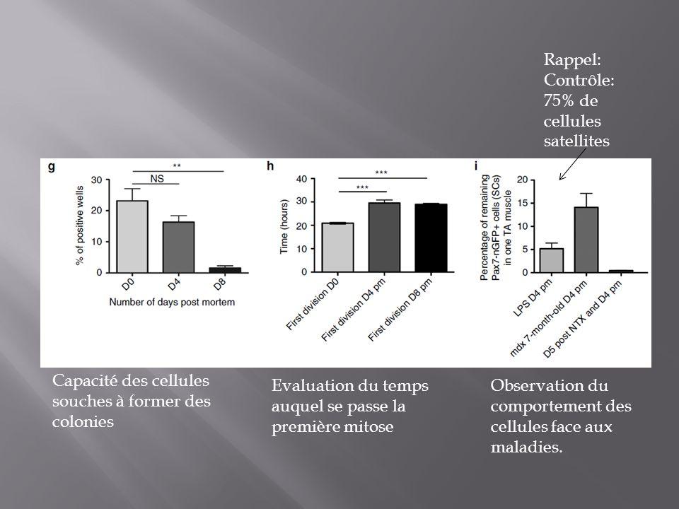 Capacité des cellules souches à former des colonies Evaluation du temps auquel se passe la première mitose Observation du comportement des cellules fa