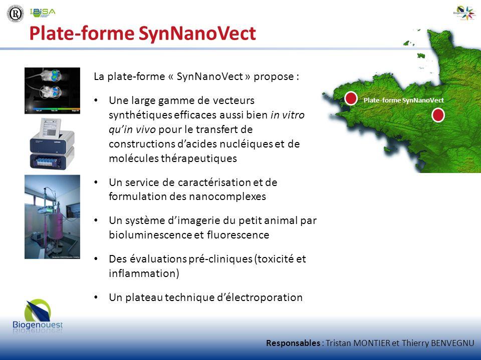 Plate-forme SynNanoVect La plate-forme « SynNanoVect » propose : Une large gamme de vecteurs synthétiques efficaces aussi bien in vitro quin vivo pour
