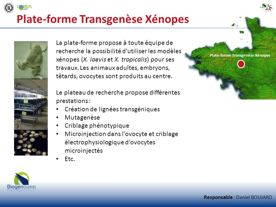 Plate-forme Transgenèse Xénopes La plate-forme propose à toute équipe de recherche la possibilité d'utiliser les modèles xénopes (X. laevis et X. trop
