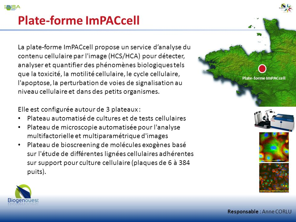 Plate-forme ImPACcell La plate-forme ImPACcell propose un service danalyse du contenu cellulaire par l'image (HCS/HCA) pour détecter, analyser et quan