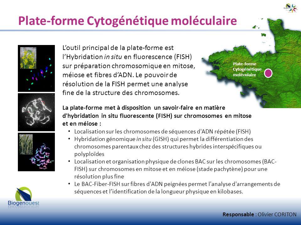 Plate-forme Cytogénétique moléculaire Loutil principal de la plate-forme est lHybridation in situ en fluorescence (FISH) sur préparation chromosomique