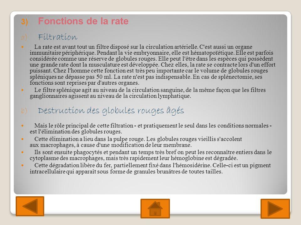 3) Fonctions de la rate a) Filtration La rate est avant tout un filtre disposé sur la circulation artérielle.