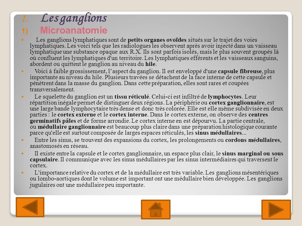 I. Les ganglions 1) Microanatomie Les ganglions lymphatiques sont de petits organes ovoïdes situés sur le trajet des voies lymphatiques. Les voici tel