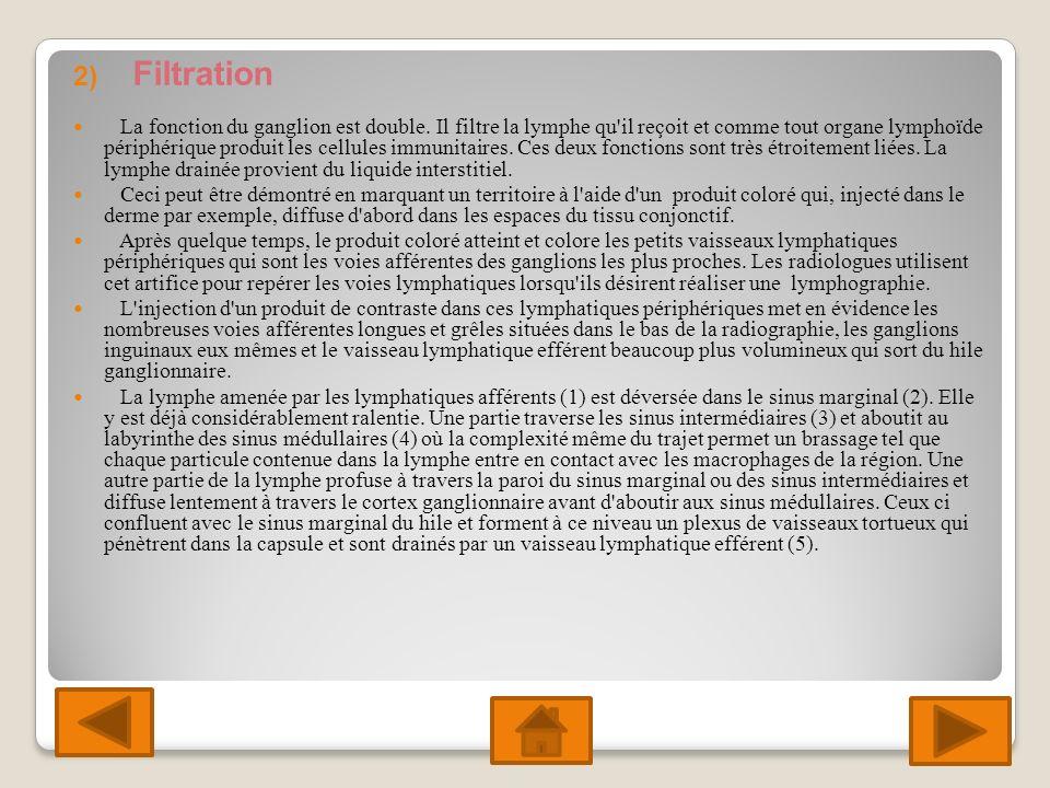 2) Filtration La fonction du ganglion est double.