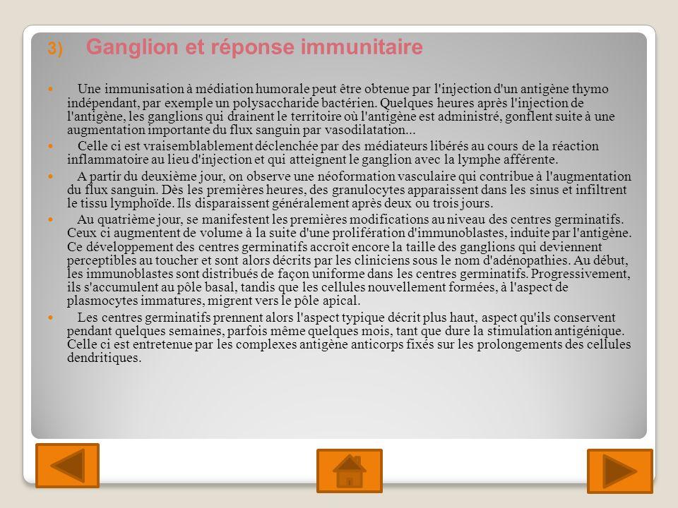 3) Ganglion et réponse immunitaire Une immunisation à médiation humorale peut être obtenue par l injection d un antigène thymo indépendant, par exemple un polysaccharide bactérien.