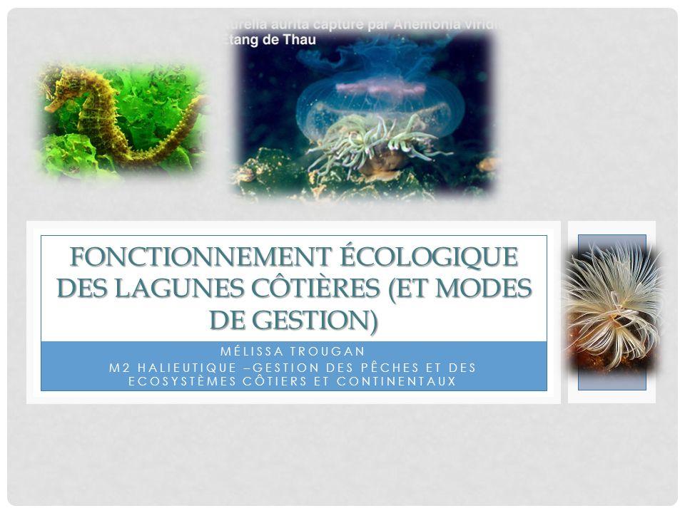 SOMMAIRE Définition 1- Définition Caractéristiques des lagunes 2- Caractéristiques des lagunes Fonctionnement écologique 3- Fonctionnement écologique Gestion des lagunes 4- Gestion des lagunes