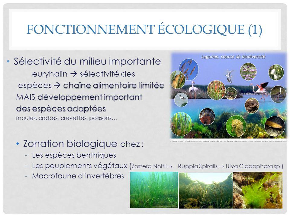 Sélectivité du milieu importante euryhalin sélectivité des chaîne alimentaire limitée espèces chaîne alimentaire limitée développement important MAIS