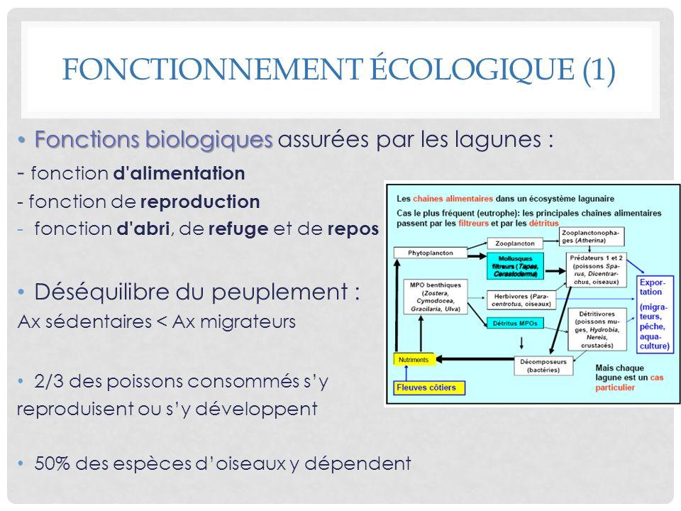 Fonctions biologiques Fonctions biologiques assurées par les lagunes : - fonction d'alimentation - fonction de reproduction -fonction d'abri, de refug