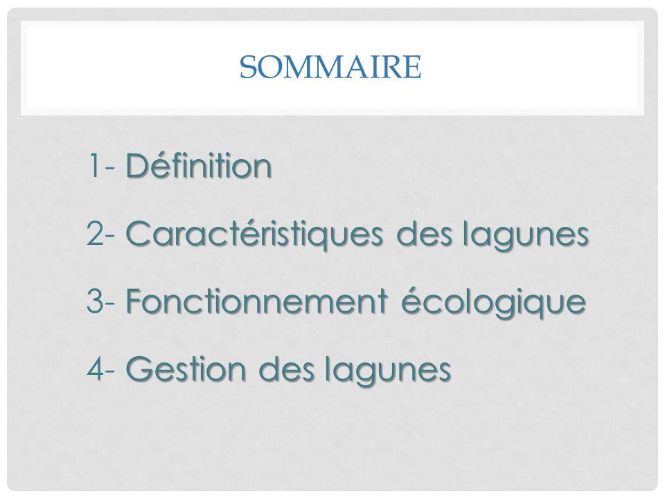 SOMMAIRE Définition 1- Définition Caractéristiques des lagunes 2- Caractéristiques des lagunes Fonctionnement écologique 3- Fonctionnement écologique
