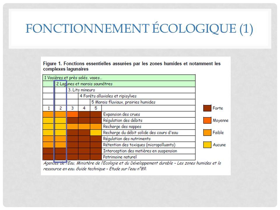 Source de biodiversité Source de biodiversité Production 1 re importante (phytoplancton + phanérogames) 100kg/ha/an - 100kg/ha/an 2 à 7x + quen mer Liée à :.