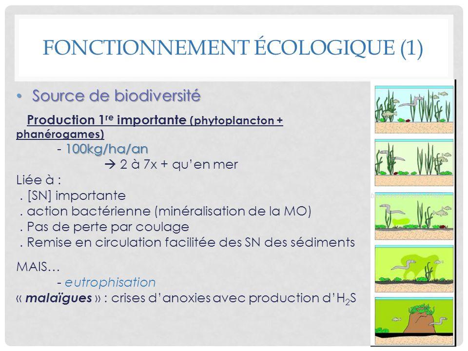 Source de biodiversité Source de biodiversité Production 1 re importante (phytoplancton + phanérogames) 100kg/ha/an - 100kg/ha/an 2 à 7x + quen mer Li