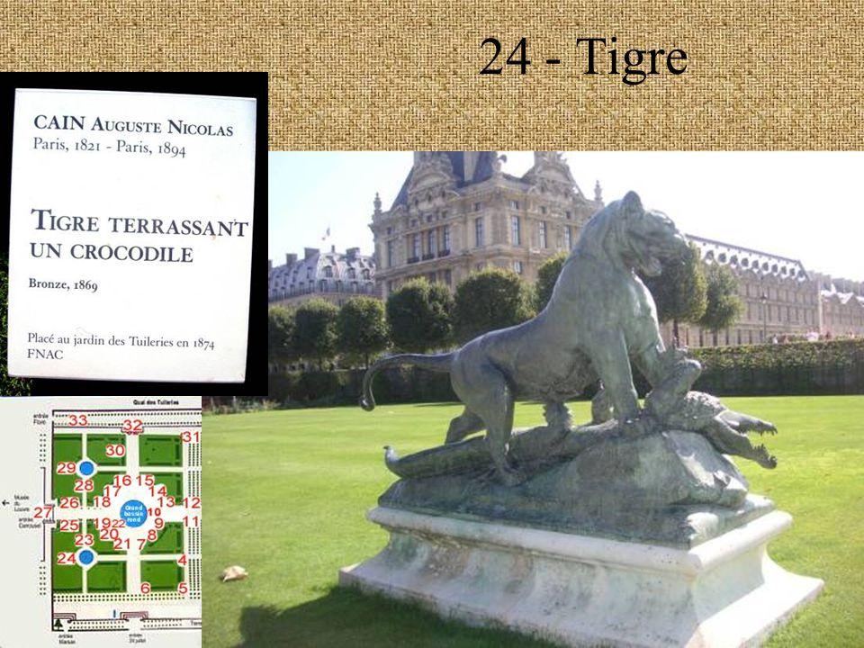 24 - Tigre
