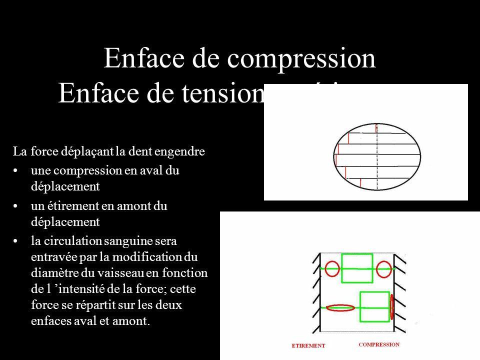 Enface de compression Enface de tension ou étirement La force déplaçant la dent engendre une compression en aval du déplacement un étirement en amont