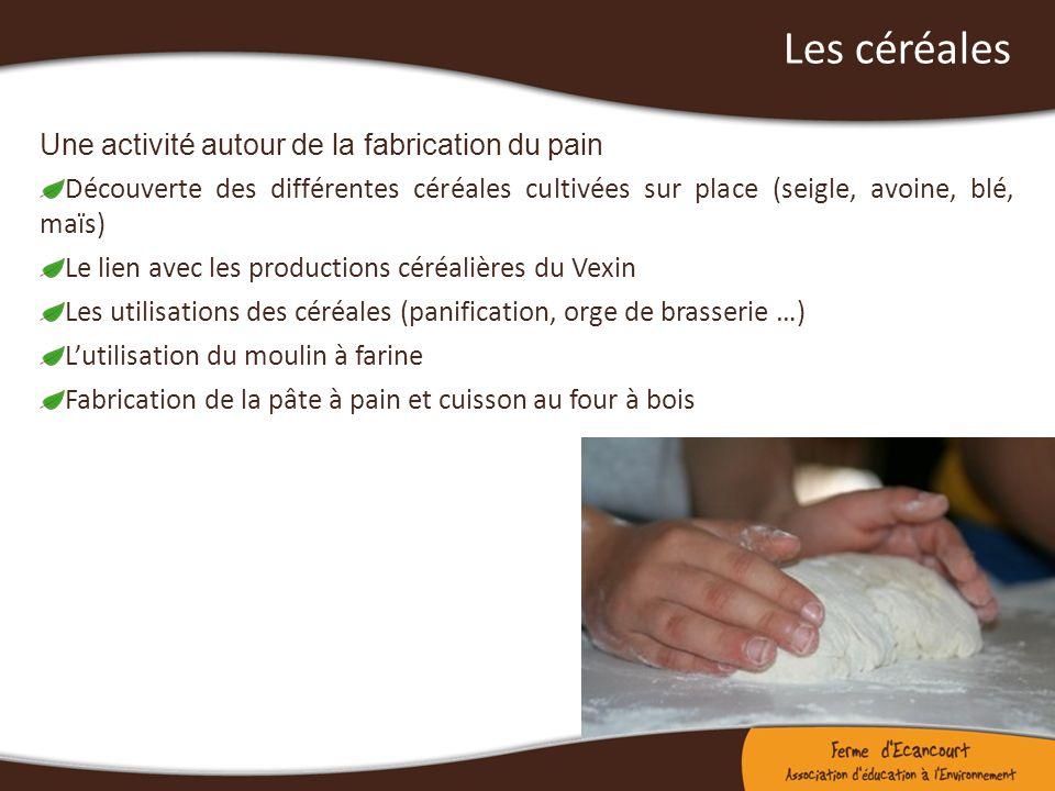 Les céréales Une activité autour de la fabrication du pain Découverte des différentes céréales cultivées sur place (seigle, avoine, blé, maïs) Le lien